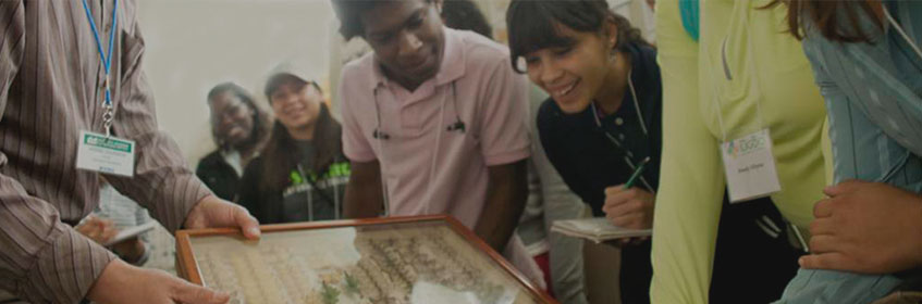 Students looking at a collection of insects in a display box