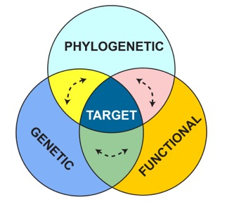 Dimensions2015 - Three dimensions of biodiversity: phylogenetic, genetic, and functional. This solicitation targets biodiversity research areas where all three overlap. Arrows illustrate the preferred emphasis on understanding dynamic relationships among those dimensions.