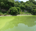 China's Lake Taihu, showing an extensive algae bloom that reaches the lake's shores.