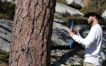 Researcher Jesse Hahm collects a tree core for forest productivity analysis.
