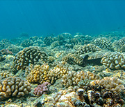 Corals at the outer reef at the NSF Mo'orea LTER site.