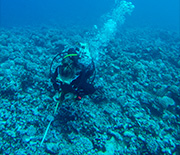 A scientist swimming underwater to study a Mo'orea reef.