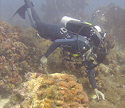 Researcher diving to study hurricane-affected reef in St. John, U.S. Virgin Islands.