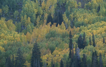 Photo of a pine forest
