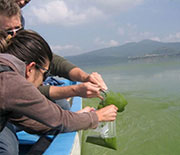 Karl Hambright's work will help identify patterns in cyanobacterial algal blooms.