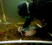 An NSF LTER scientist identifies understory seaweeds in a kelp forest near Isla Vista, California.