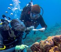 Researchers Rebecca Vega Thurber and Ryan McMinds gathering reef samples