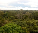 View of a tropical forest in the Amazon from the top of a research tower in Brazil.