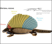 Edaphosaurus fossils came from late Carboniferous to early Permian times, 300-280 million years ago.