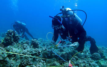 Scientists Russ Schmitt, Sally Holbrook conduct research on corals at the NSF Moorea LTER site.