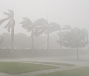 Trees and rain being blown by winds during 2017's Hurricane Irma.