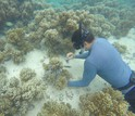 Researchers at the University of Guam sample sponges off Guam's coast.