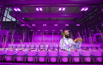 University of Nebraska-Lincoln principal investigator Harkamal Walia examines samples in a phenotyping facility.