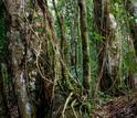 Scientists at Luquillo have shown that carbon cycling by tropical forests is sensitive to climate.