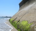 Seawall in the intertidal zone of a sandy beach in Santa Barbara County, California.