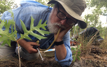 University of Oklahoma ecologist Michael Kaspari samples the ants from a plot at the Ordway Swisher NEON site.