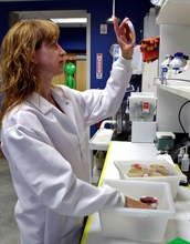 University of Colorado Denver associate professor Timberley Roane examines bacterial growth on Petri plates in her research laboratory in the school's department of integrative biology.