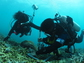Divers collecting algae samples in the ocean.