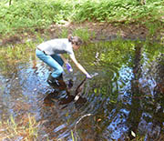 Vivien Taylor of Dartmouth College collects a water sample from a forest pool.