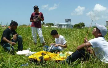 students in a field collecting insects