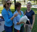 Researchers release a white ibis outfitted with a GPS transmitter