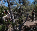 Scientists Abigail Swann, Dave Minor and Juan Villegas measure live and dead trees in New Mexico.