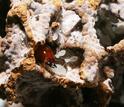 scientific paper on termites