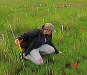 A female scientist kneeling in a grassy area, collecting samples.