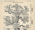 The tree of life as viewed by Ernst Haeckel in his 1879 work The Evolution of Man.