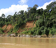 Tropical forests like this one in Peru may take up more carbon than northern temperate forests.