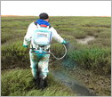 Man spraying of herbicide to eradicate invasive Spartina