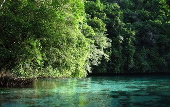 water and tress in Palau's Rock Island bay