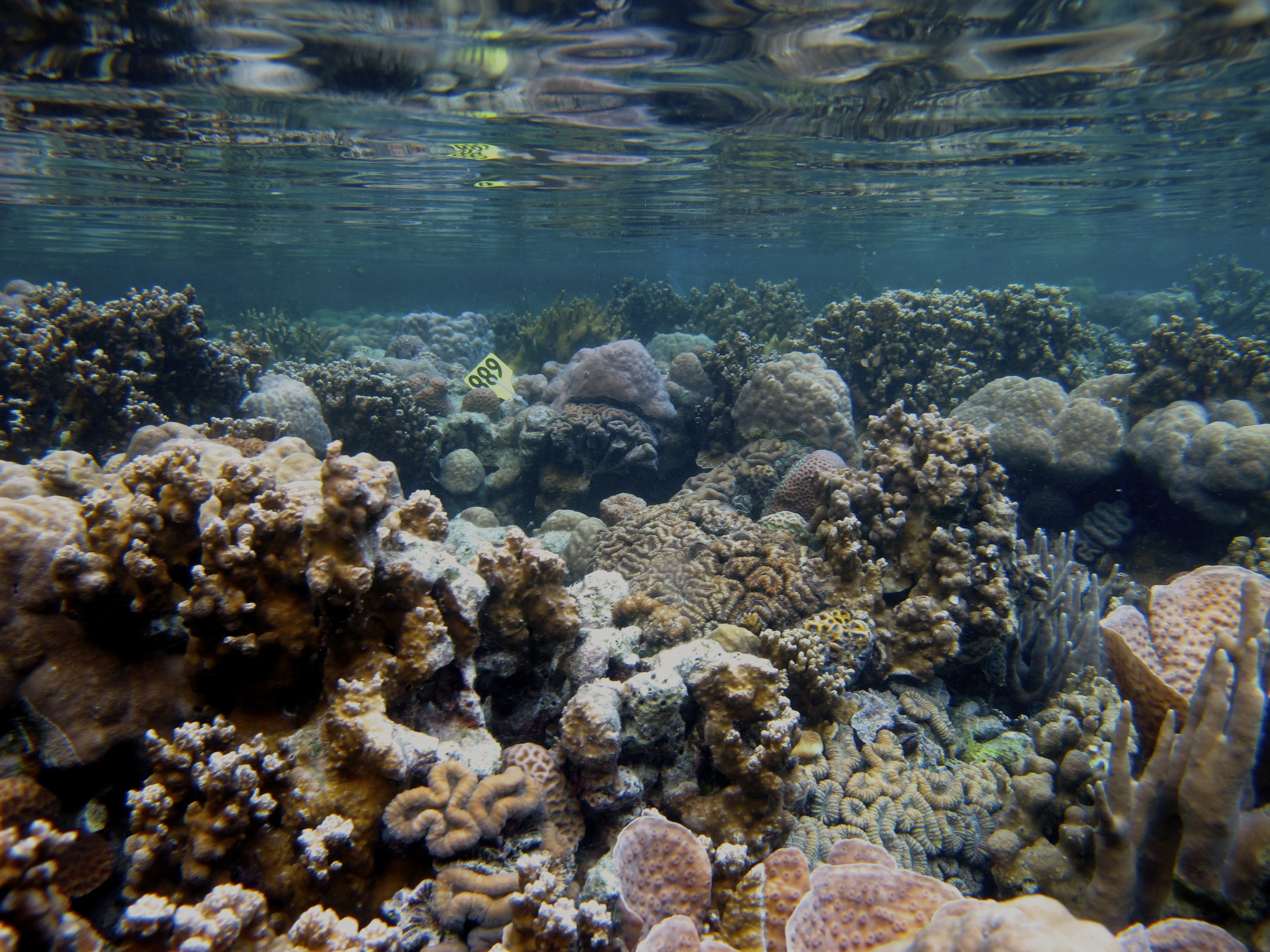 largest coral reef research - HD3648×2736