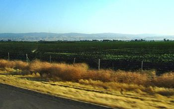 California's Central Valley, with the rugged hills of the Coast Ranges in the background.