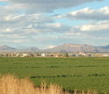 Central Arizona-Phoenix LTER site including mountains, grass and buildings