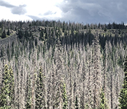 Tree die-offs can affect other vegetation, including crops, the focus of a new CNH study.