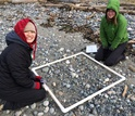 two COASST interns look for small debris on the beach