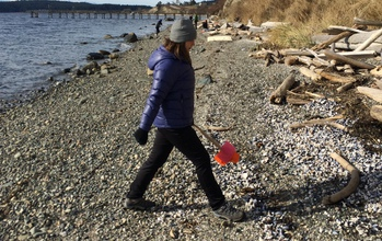 A COASST intern paces the width of a narrow Puget Sound beach