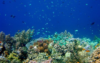 coral reef and fish near Philippines