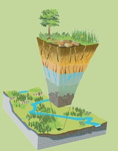 Where rock meets life: Earth's critical zone extends from tree canopy to bedrock.