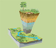 The top of the forest canopy to the base of bedrock is known as Earth's critical zone.