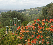 CNH researchers are investigating ecosystem changes in South Africa's Cape Floristic Region.