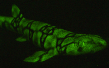 a green glowing fish
