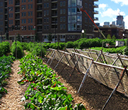 Chicago urban farms