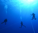 A team of scuba divers collects ctenophores off the coast of Hawaii during a research expedition.
