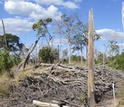 Forest with bare land degraded by experimental fires in Mato Grosso, Brazil.