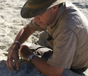 Paleontologist David Krause excavating fossils from sediments in Madagascar.