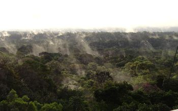 Amazon forest from tree line