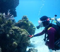 Alexandra Davis under water studying corals