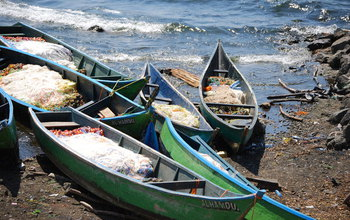 Fishing boats ply the waters of Africa's Lake Victoria, site of the research study.